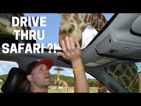 There's a Drive Thru Zoo in DFW?!! | Family Trip to Fossil Rim
