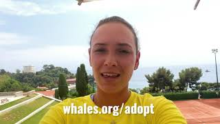 WTA and ATP players rally together for WDC on World Whale and Dolphin Day