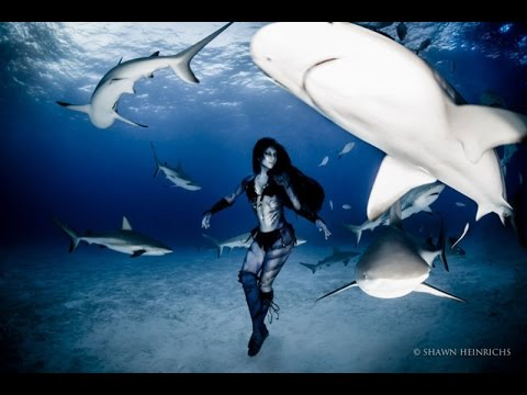 Greatest Real Video Footage Woman Dances With 17-Foot Tiger Sharks Of All Time
