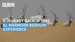 Journey Back in Time | Al Marmoom Bedouin Experience – Visit Dubai