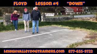 Lehigh Valley Dog Trainers: Off Leash K9 Training ||| Week 4, Floyd learning the Extended Down