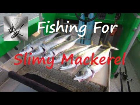 Fishing For Slimy Mackerel | Fishing & Cooking