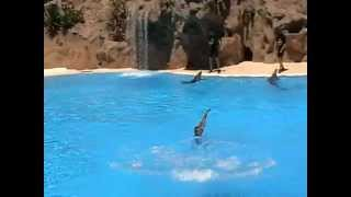 Лора Парк Тенерифе дельфины(, 2014-05-12T12:04:16.000Z)