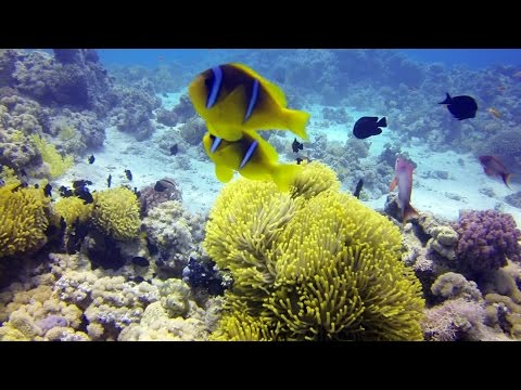 Diving Laguna Reef 2 - Sharm El-Sheikh [HD]