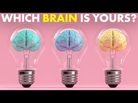 There Are 3 Types of Brain. Which Do You Have?