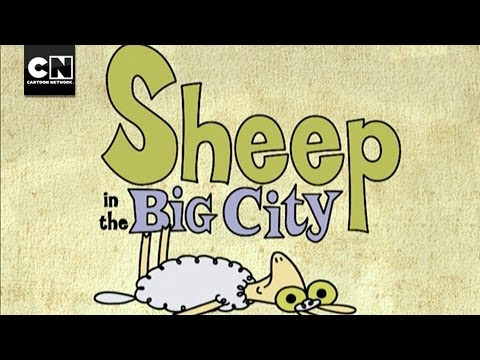 Sheep In The Big City | Theme Song | Cartoon Network