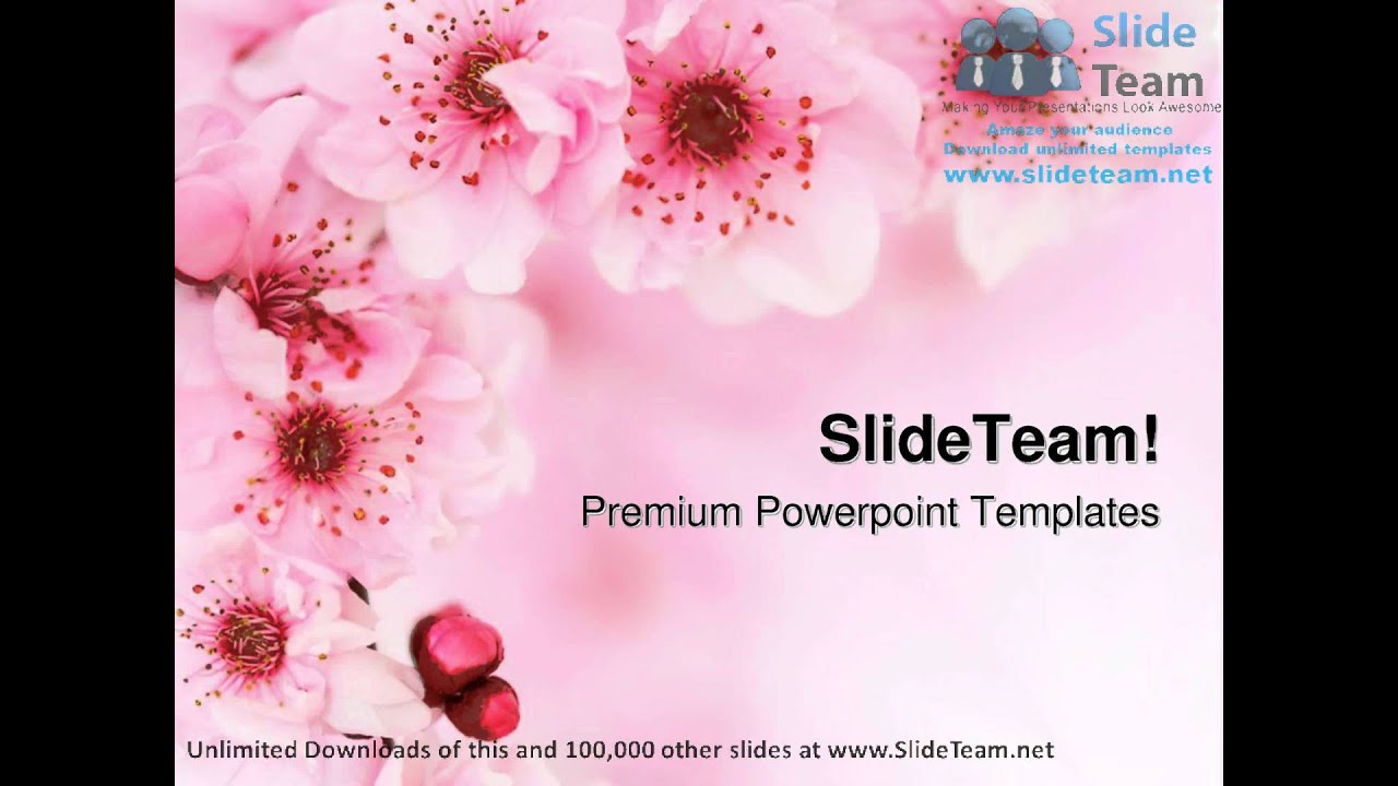 Spring cherry flowers background beauty powerpoint templates spring cherry flowers background beauty powerpoint templates themes and backgrounds ppt layouts toneelgroepblik Choice Image