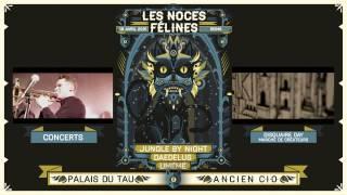 LES NOCES FÉLINES #3
