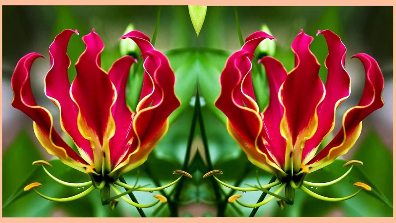 Комнатные цветы из семян: как вырастить в домашних условиях 3