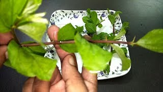 इस पेड़ की १० पत्तियां रातोरात दाद खाज खुजली को कर देंगी गायब | daad khaj khujli solution