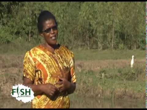 She Has 12 Years In Fish Farming Business - Part 1