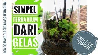 DIY Simple Vivarium/Terrarium  | Membuat Terrarium/Vivarium dari gelas