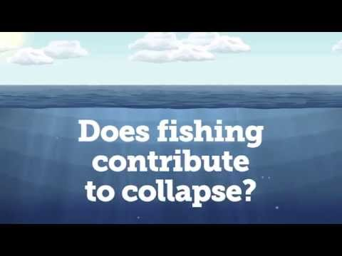 Does fishing contribute to collapse?