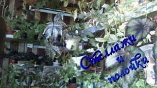 Комнатные растения осенью(мои стеллажи, подоконники и полочки)(Комнатные растения в домашних условиях осенью. Сразу предупреждаю, кто не любит большое количество растени..., 2014-10-23T15:11:13.000Z)