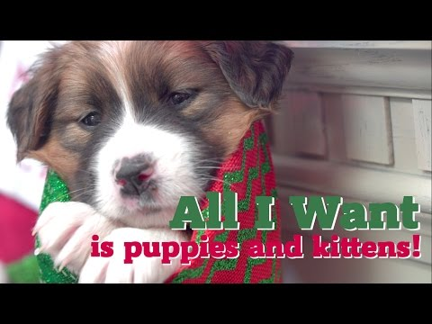 All I Want is Puppies and Kittens!