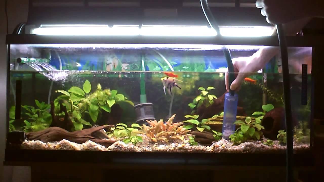 Tutorial como cuidar tu acuario limpieza youtube for Como criar peces ornamentales en casa