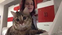 kedi özel harekat (köh) 1