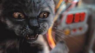 Кошка умывается в раковине