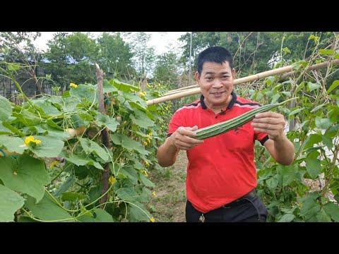 Download PAANO MAPARAMI ANG BULAKLAK AT BUNGA NG PATOLA at IBA PANG HALAMAN (with ENG subs)