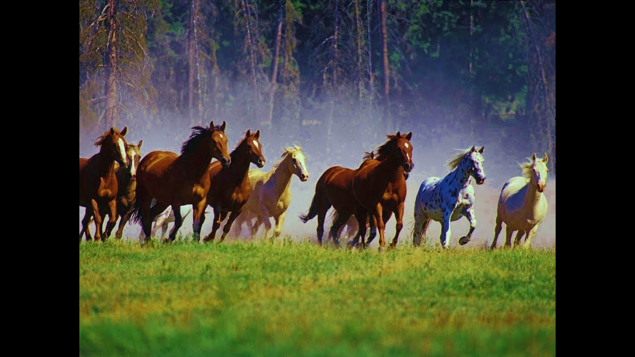 1 Hour Relax with WILD HORSES (Mustang) & Music - YouTube