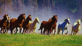 1 Hour Relax with WILD HORSES (Mustang) & Music
