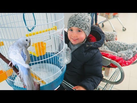 Membru Nou in Familie! Alex Si-a Cumparat Papagal!