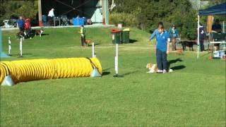 Katie Jd Title - Agility Dog Club Nsw 14 July 2012.wmv