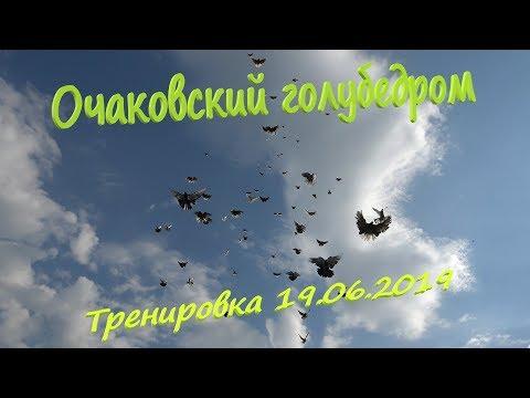 Очаковский голубедром. Тренировка голубей 19.06.2019
