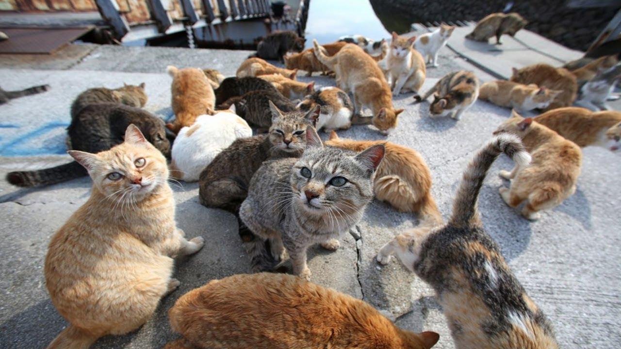 Wanita Ini Sudah Pelihara 500 Ekor Kucing Selama Tujuh Tahun Youtube