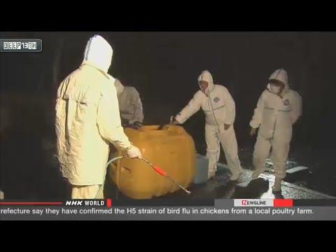 Environment Watch: Bird flu confirmed in southwestern Japan 12/16/2014