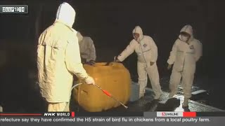 Environment Watch: Bird flu confirmed in southwestern Japan 12/16/2014
