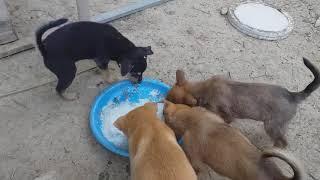 nuôi chó con như thế nào và cách chọn chó c๐n khỏe rễ nuôi nhất