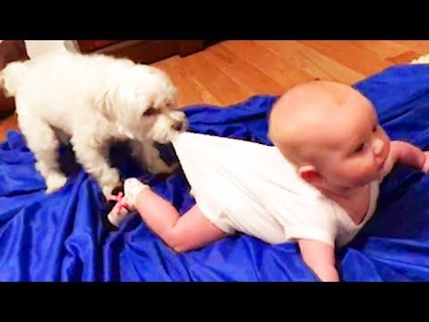 Happy Babies and Dogs are playing together #2