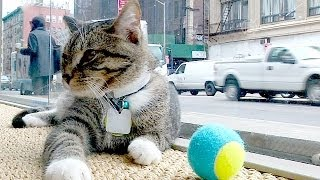 Первое «кошачье кафе» открылось в Нью-Йорке (новости)