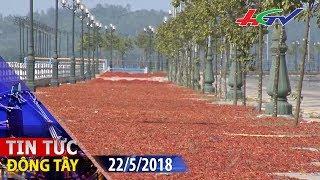 Thực hư nguyên nhân độc tố Aflatoxin gây ung thư trong ớt bột | TIN TỨC ĐÔNG TÂY - 22/5/2018