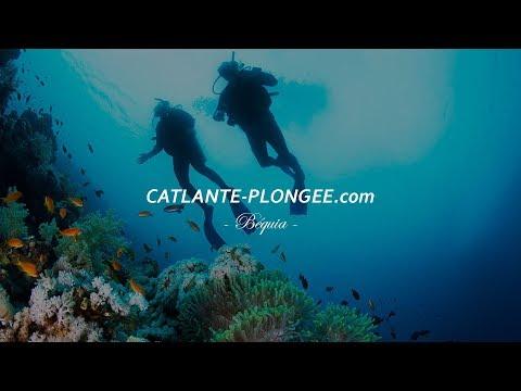 Studio 3 ELEMENTS - Plonger à Béquia aux Grenadines - Film promo Catlante Plongée