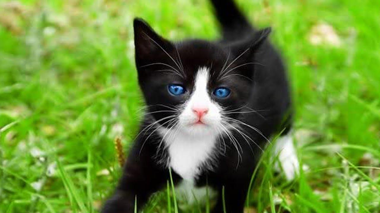 Gatinhos Miando - Som de Gato