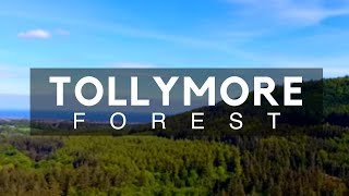 Tollymore Forest, Newcastle, County Down, Northern Ireland - NI - Forest Parks Northern Ireland