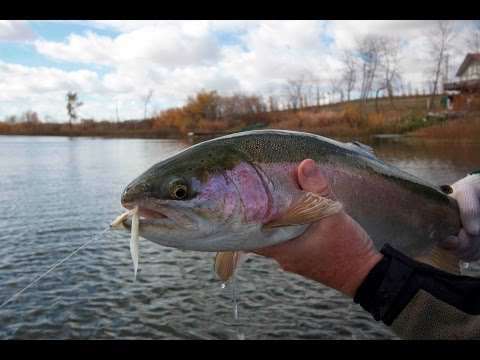 Rainbow Trout in Ponds | Ontario