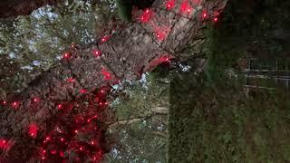 Guirlande de Noël  lumineuse extérieure clignotante 34m, 750 LED blanches et rouges vidéo
