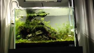 Ada Mini M Aquascape 3 Week 5 Algae