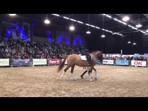 Hillerød Horseshow Clinic Rid med hjertet (SUBS) Nov 2016