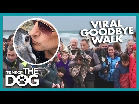 Hundreds Join Old Dog On His Last Walk | Britain's Favourite Dogs