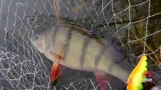5 факторов, влияющих на клев рыбы(ПОДПИСЫВАЙТЕСЬ на канал - https://www.youtube.com/channel/UCfMV6w8vBN1Qhu3ou15Y3bg ДОБАВЛЯЕМСЯ в друзья http://vk.com/id348535885 ..., 2016-04-08T04:00:03.000Z)