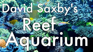David Saxby's Aquarium 2017