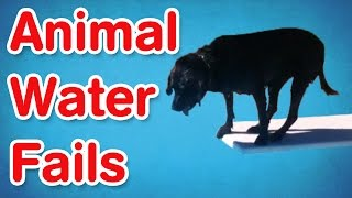 Animal Water Fails | Best of AFV