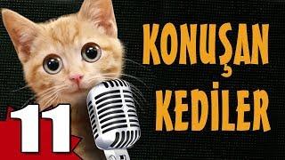 Konuşan Kediler 11 - En Komik Kedi Videoları