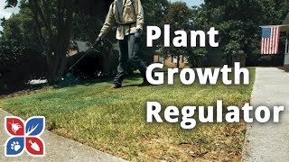 Do My Own Lawn Care  -  Plant Growth Regulator and Liquid Fertilizer