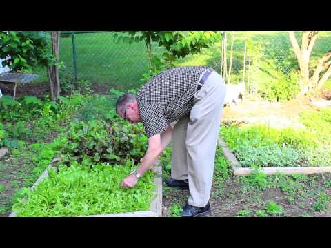 Ohio Native Plant Gardening Like a Pro