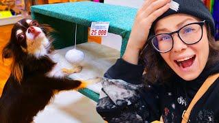 Download Собака сама выбирает, что купить в зоомагазине! Покупаю собаке всё к чему она прикоснется в магазине Mp3 and Videos